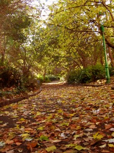 Path in Merrion Square, Dublin